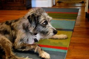 Elly, Jen's Wonder Dog